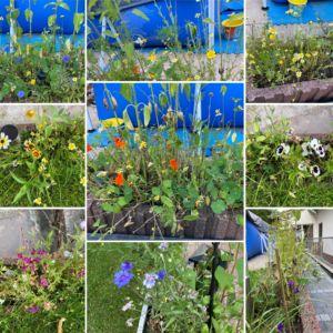 Mia's Blumengarten